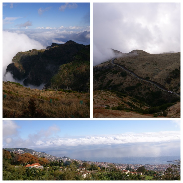 madeira_collage2