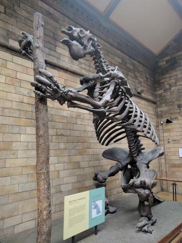 Muzeum Historii Nautralnej